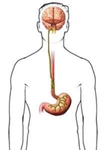 vagus-nerve-image.jpg33